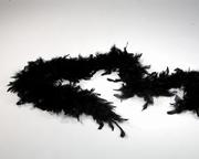 Boa noir
